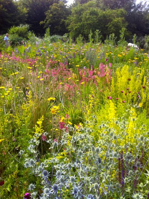 Farvefin eng i botanisk have i Oxford.