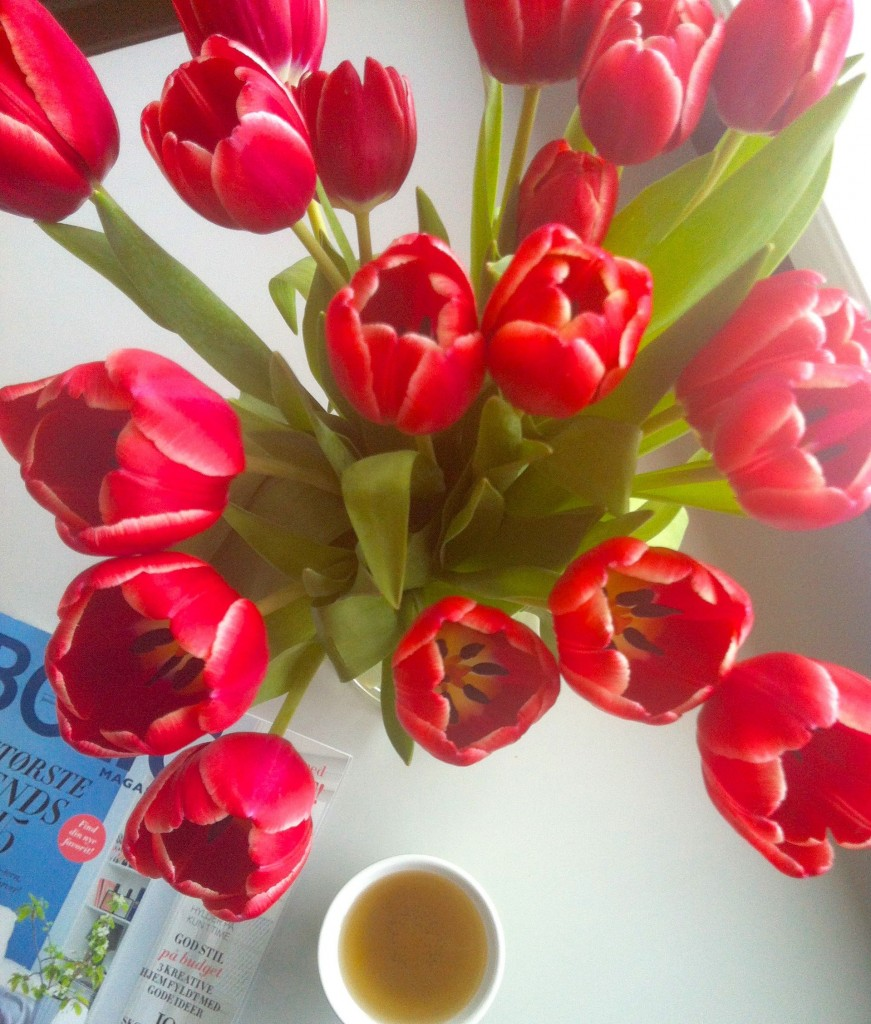 Januarmums tulipaner