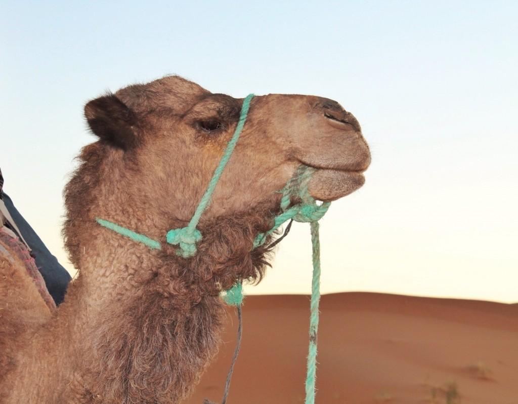 Postkort fra Marokko